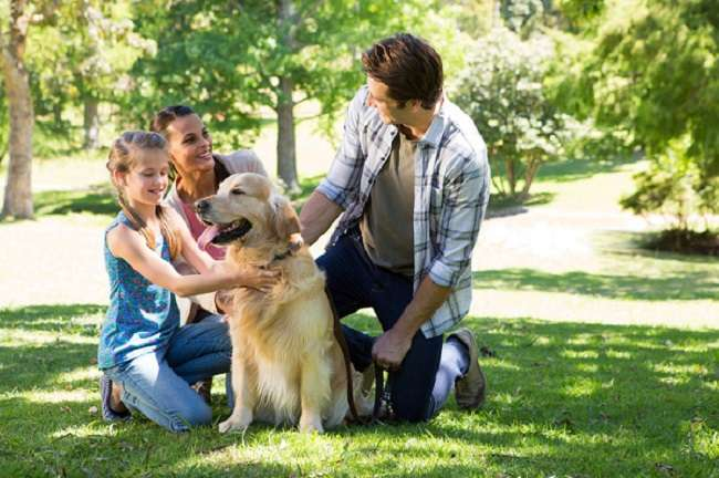 6 Facts a Pet Owner Should Care About - Socializing and refreshment